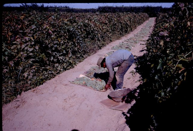 farming-operations029